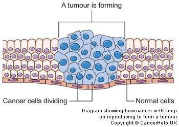 Cancer Cells Grow Out Of Control | cristinaffalcao